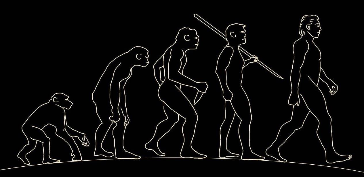 evolución del hombre sencilla